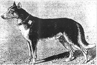 Berger_Picard_1890